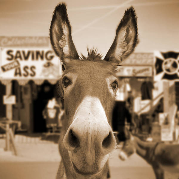 66 Photograph - Route 66 - Oatman Donkeys by Mike McGlothlen
