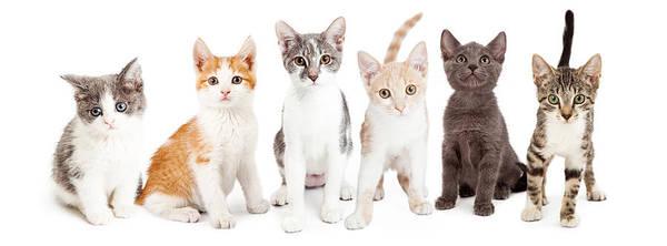 Wall Art - Photograph - Row Of Cute Kittens Together by Susan Schmitz
