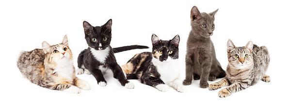 Wall Art - Photograph - Row Of Five Cute Kittens Together by Susan Schmitz