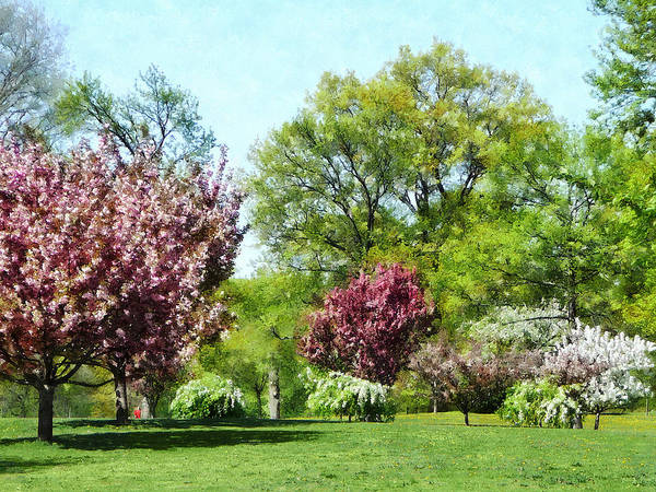 Photograph - Row Of Flowering Trees by Susan Savad