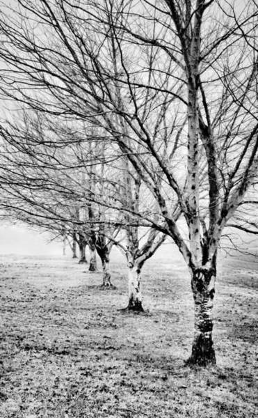 Knot Hole Photograph - Row Of Leafless Trees In Fog - B/w by Greg Jackson