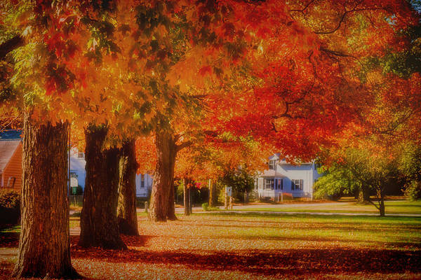 Photograph - Row Of Maples by Jeff Folger