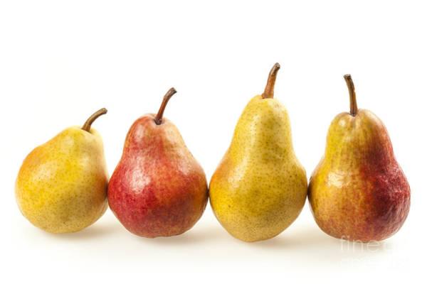 Photograph - Row Of Pears by Elena Elisseeva