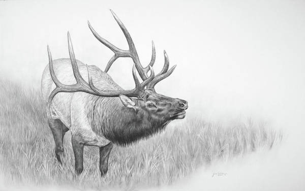 Bugling Drawing - Royal Announcement by Jim Weaver