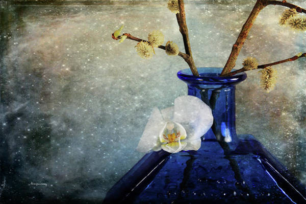 Photograph - Royal Blue by Randi Grace Nilsberg
