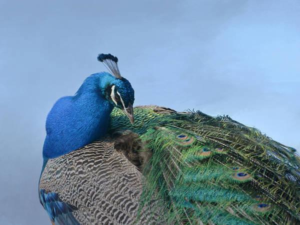 Photograph - Royal Fowl 18 by Fraida Gutovich