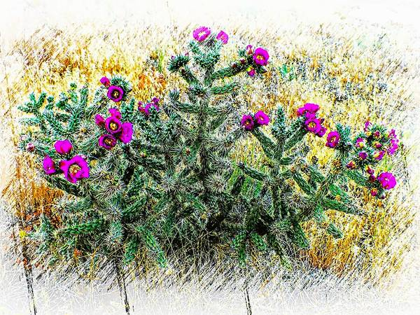 Photograph - Royal Gorge Cactus With Flowers by Joseph Hendrix