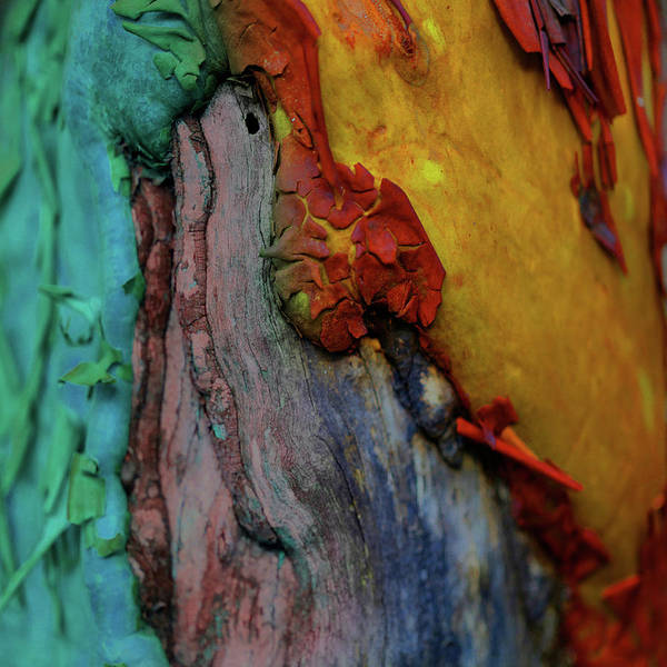 Digital Art - Royal Path by Richard Laeton