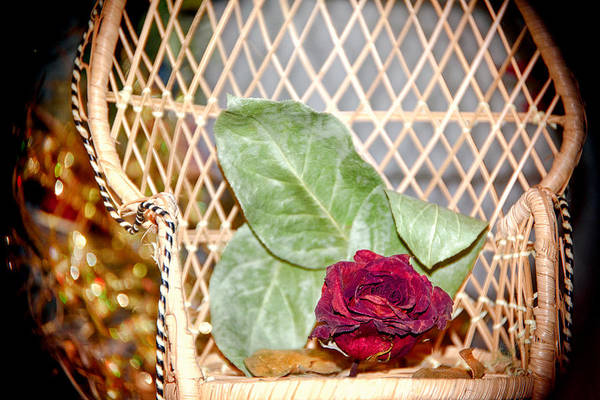 Wall Art - Photograph - Royal Rose by Camille Lopez