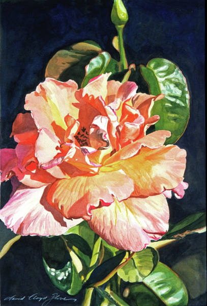 Close-up Painting - Royal Rose by David Lloyd Glover