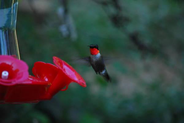 Photograph - Ruby by Lori Tambakis