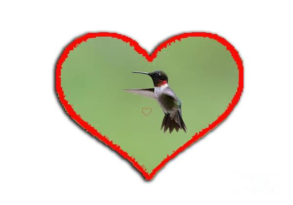 Photograph - Ruby-throated Hummingbird In Heart by Dan Friend