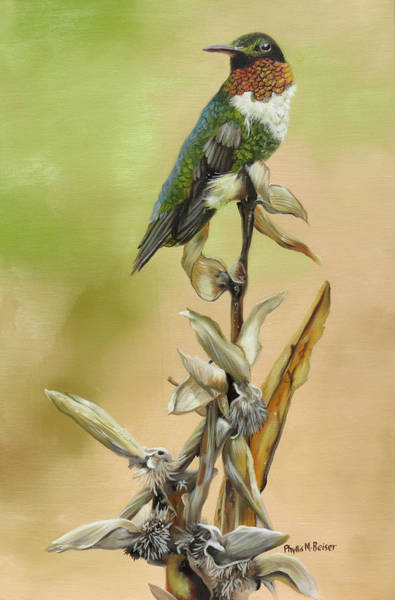 Wall Art - Painting - Ruby Throated Hummingbird Study by Phyllis Beiser
