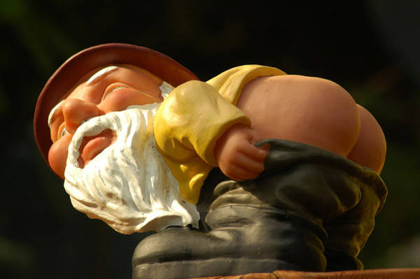 Photograph - Rude Gnome by Harry Spitz