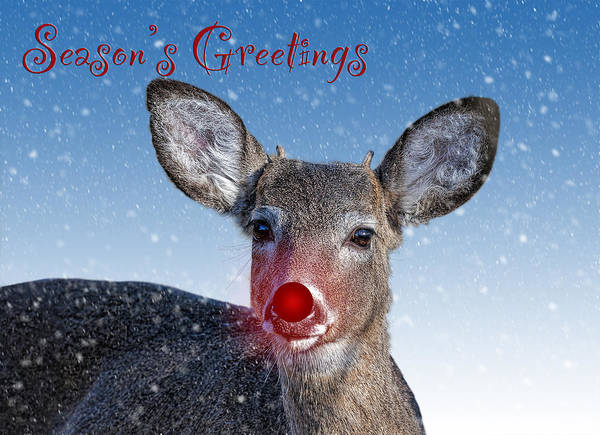 Wall Art - Photograph - Rudolph Seasons Greetings Card by SharaLee Art