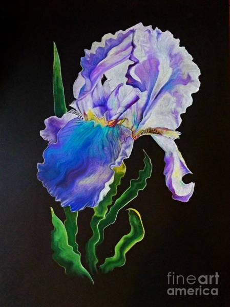 Drawing - Ruffled Iris by David Neace