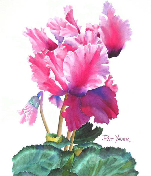 Wall Art - Painting - Ruffled Pink Cyclamen Persicum by Pat Yager