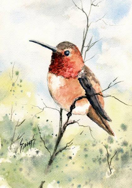 Rufous Hummingbird Wall Art - Painting - Rufous Hummingbird by Sam Sidders