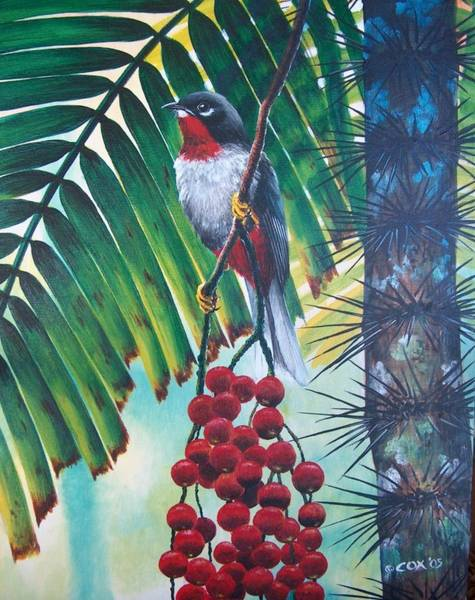 Painting - Rufous-throated Solitaire by Christopher Cox
