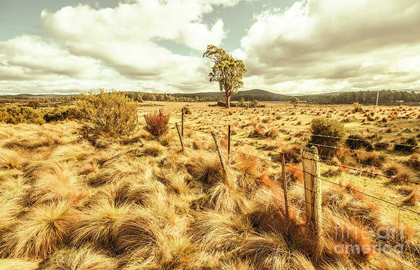 Shrubs Photograph - Rugged Australian Pastures by Jorgo Photography - Wall Art Gallery