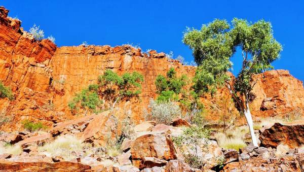 Photograph - Rugged Beauty - Ormiston Gorge by Lexa Harpell