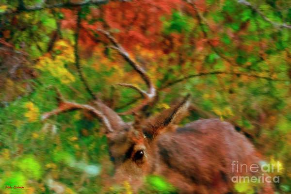 Photograph - Running Buck by Blake Richards