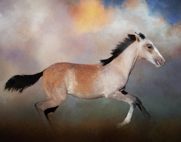 Photograph - Running Colt by Gloria Anderson