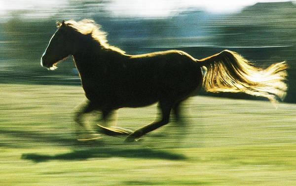 Photograph - Running Horse Backlit by Steve Somerville
