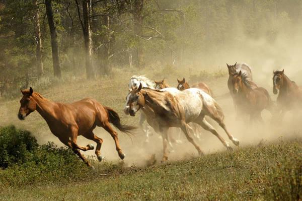 Photograph - Running Horses by Scott Read
