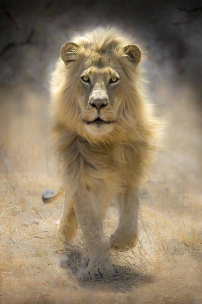 Big 5 Photograph - Running Lion by Stu Porter