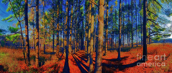 Photograph -    Running, Path, Pine, Grove, Crystal, Lake, Illinois, Parks, Panorama by Tom Jelen