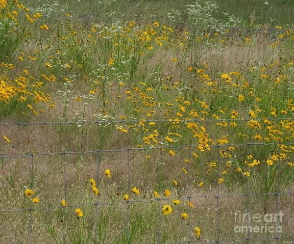 Photograph - Rural Arkansas Road View by Lizi Beard-Ward