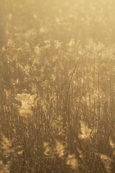 Wall Art - Photograph - Rural Field At Sunrise by Dan Sproul