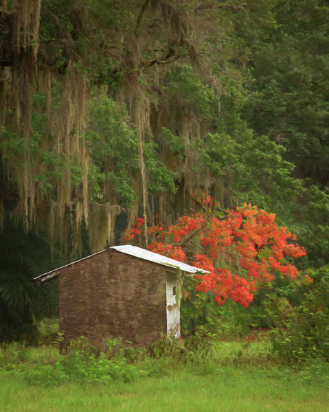 Royal Oak Photograph - Rural Florida - Live Oak, Royal Poinciana, And A Shed by Mitch Spence
