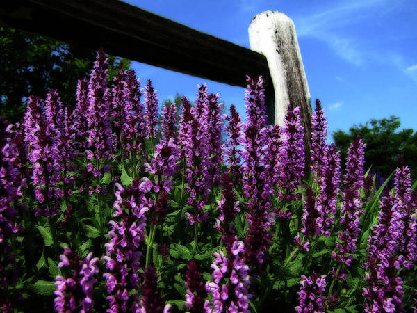 Photograph - Rural Flower Garden by Scott Hovind