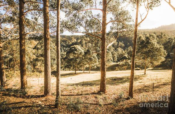 Eucalyptus Photograph - Rural Paddock In Australian Countryside by Jorgo Photography - Wall Art Gallery