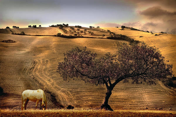 Yellow Ochre Wall Art - Photograph - Rural Spain View by Mal Bray