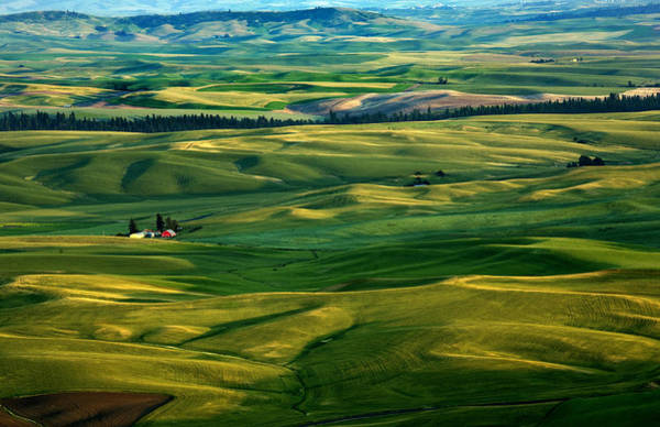 Palouse Photograph - Rural Tapestry by Mike  Dawson