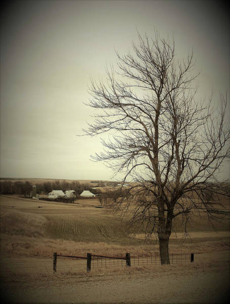 Wall Art - Photograph - Rural Tree by Toni Grote