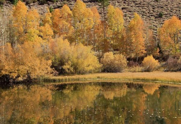 Photograph - Rush Creek Autumn  by Sean Sarsfield