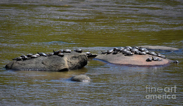 Critters Photograph - Rush Hour At The Spa by Skip Willits