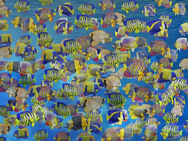 Schooling Wall Art - Digital Art - Rush Hour by Betsy Knapp