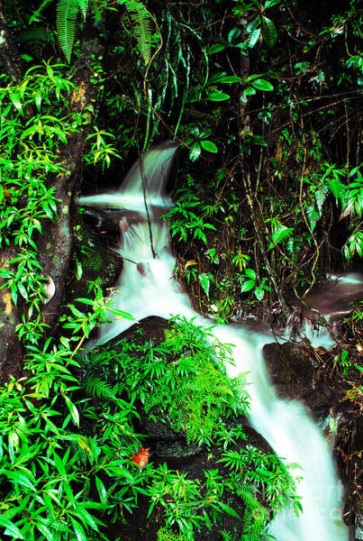 Photograph - Rushing Stream El Yunque National Forest Mirror Image by Thomas R Fletcher