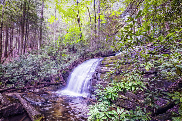 Photograph - Rushing Through The Forest by Debra and Dave Vanderlaan