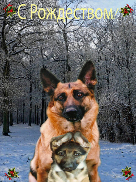 Russian Holiday German Shepherd And Puppy Art Print
