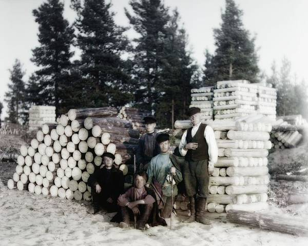 Photograph - Russian Lumber Harvest by John Feiser