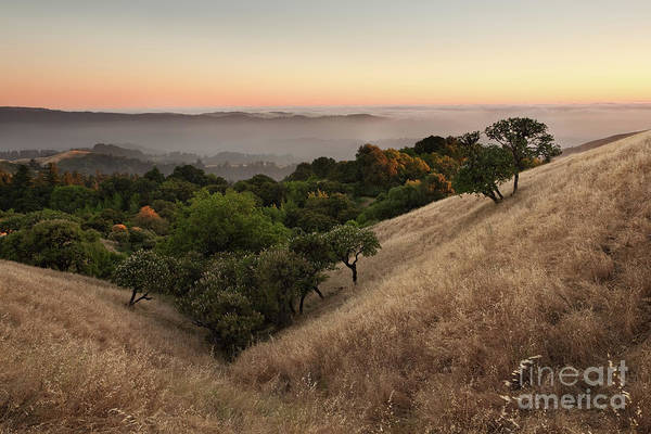 Russian Ridge In Summer Art Print