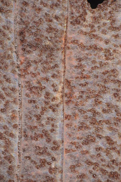 Photograph - Rust 1 by Michael Raiman