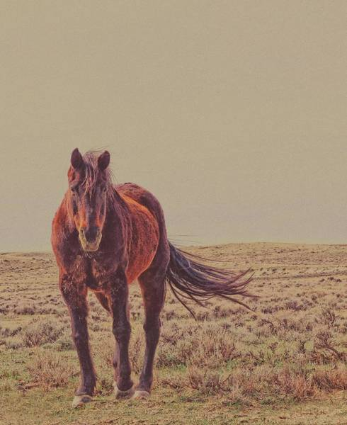 Photograph - Rust And Prairie Wise by Amanda Smith