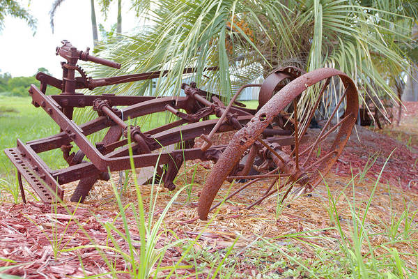 Photograph - Rust by Gordon Elwell